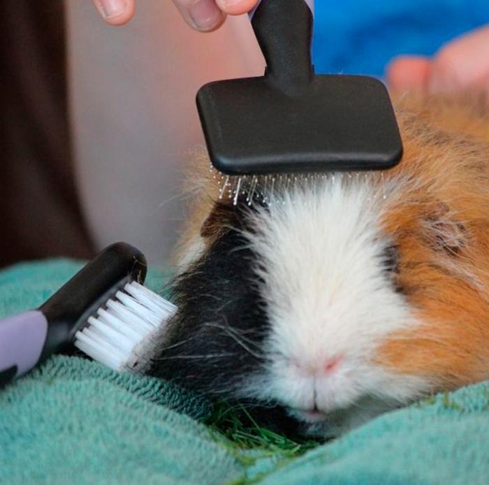 El cuidado del pelo en los roedores