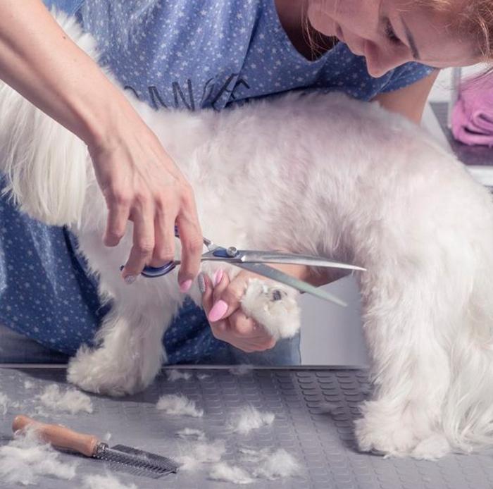 Cortar el pelo de gatos y perros en verano
